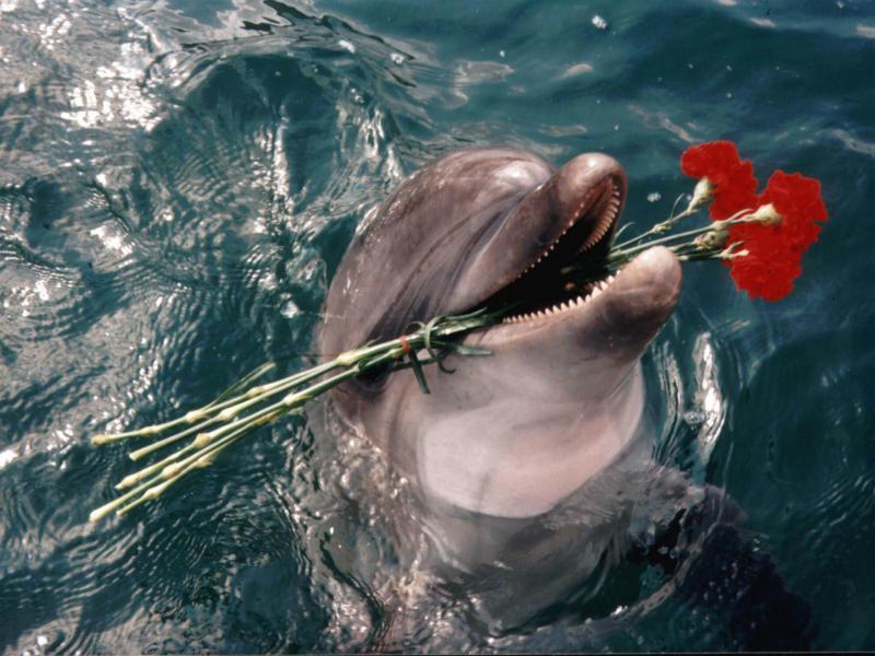 Пазл Собирать пазлы онлайн - Дельфин с цветами