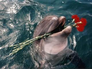 Собирать пазл Дельфин с цветами онлайн