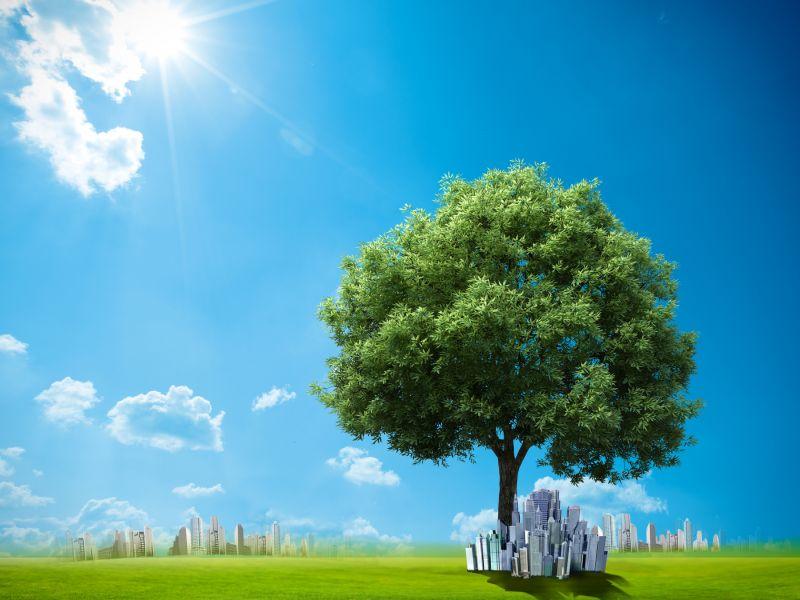 Пазл Собирать пазлы онлайн - Дерево