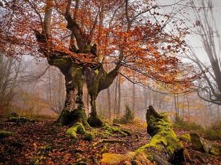 Собирать пазл дерево онлайн