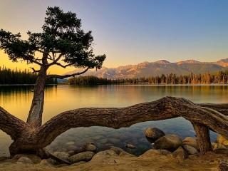 Собирать пазл Дерево на берегу онлайн
