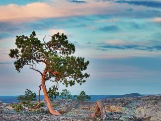 Собирать пазл Дерево на скале онлайн