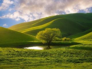 Собирать пазл Дерево среди холмов онлайн