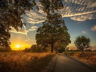 Собирать пазл Дерево у дороги онлайн