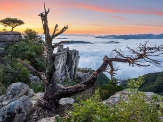 Собирать пазл Дерево в горах онлайн