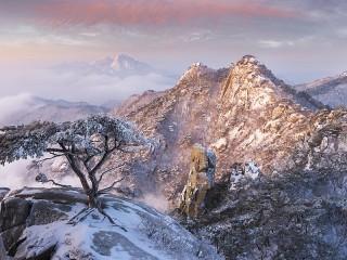Собирать пазл Дерево в камне онлайн