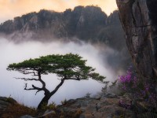 Собирать пазл Дерево в тумане онлайн