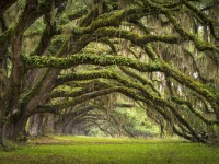 Собирать пазл Деревья онлайн