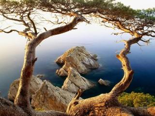 Собирать пазл Деревья на берегу онлайн