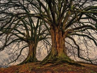 Собирать пазл Деревья в тумане онлайн