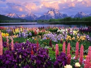 Собирать пазл Долина цветов онлайн