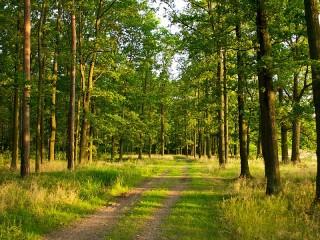 Собирать пазл Дорога в лесу онлайн