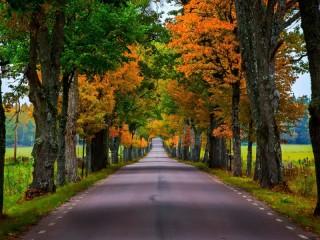 Собирать пазл Дорога в осень онлайн