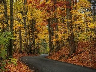Собирать пазл Дорога в осенний лес онлайн