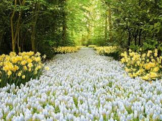 Собирать пазл Дорожка в лесу онлайн