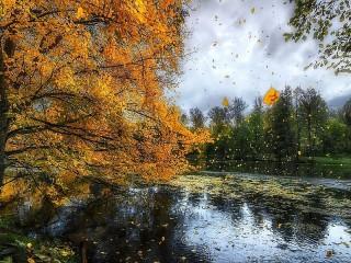 Собирать пазл Дождливая осень онлайн