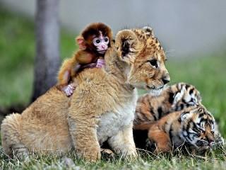 Собирать пазл Друзья животные онлайн