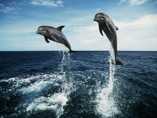 Собирать пазл Два дельфина онлайн