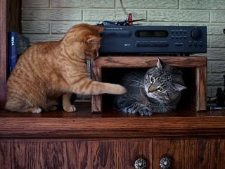Собирать пазл Два кота онлайн