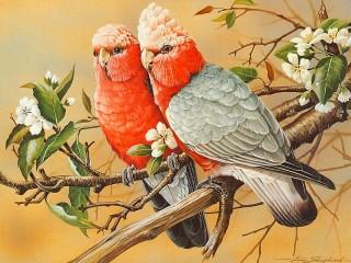 Собирать пазл Два попугая онлайн