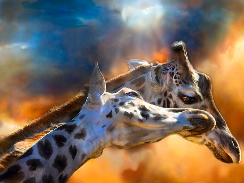 Пазл Собирать пазлы онлайн - Два жирафа