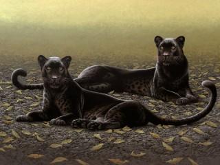 Собирать пазл Две пантеры онлайн