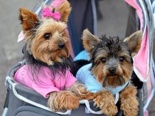 Собирать пазл Две собаки онлайн