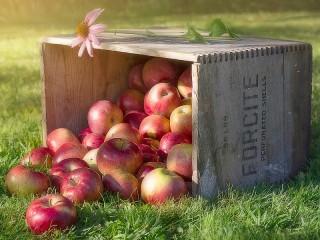 Собирать пазл Эхинацея и яблоки онлайн