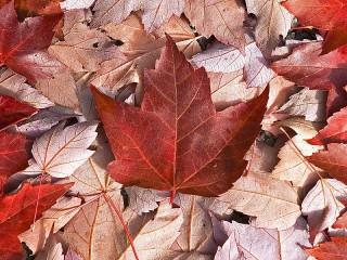Собирать пазл Флаг из листьев онлайн