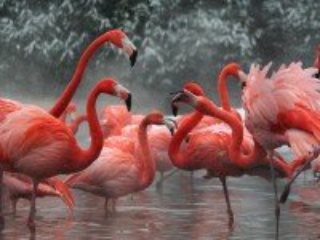 Собирать пазл Фламинго в снегу онлайн