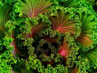 Собирать пазл Фрактал салат онлайн
