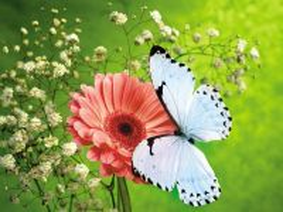 Собирать пазл Гербера с бабочкой онлайн