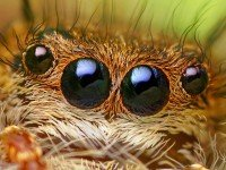 Собирать пазл Глаза паука онлайн