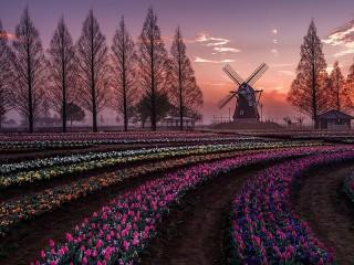 Собирать пазл Голландский пейзаж онлайн