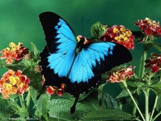 Собирать пазл Голубая бабочка онлайн