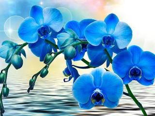 Собирать пазл Голубая орхидея онлайн