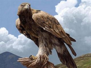 Собирать пазл Гордая птица онлайн