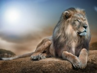 Собирать пазл Гордый лев онлайн
