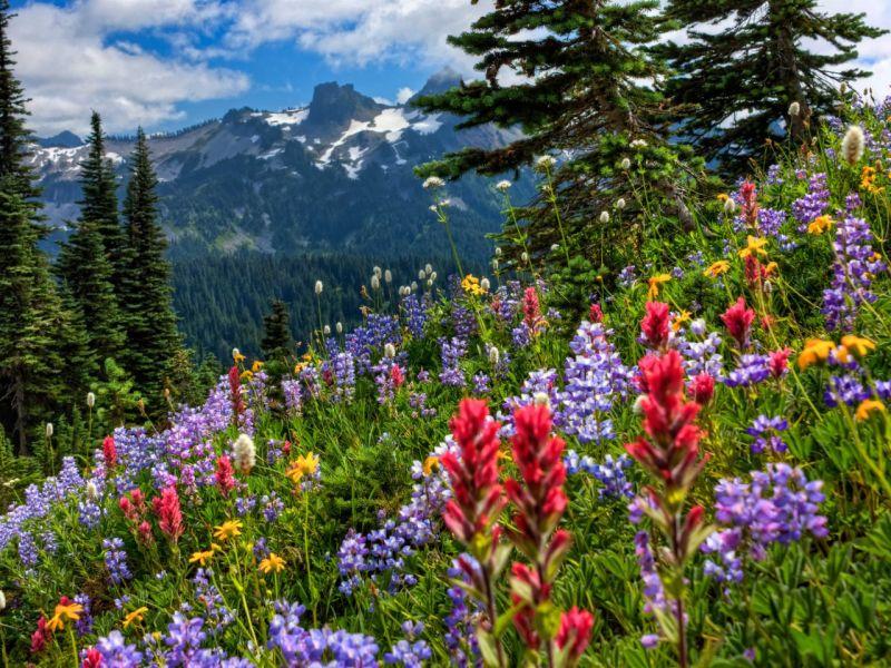 Пазл Собирать пазлы онлайн - Горы цветы