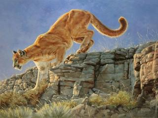 Собирать пазл Горный лев онлайн