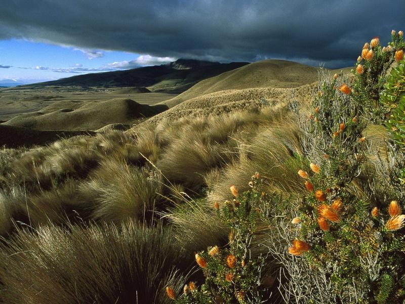 Пазл Собирать пазлы онлайн - Горное плато