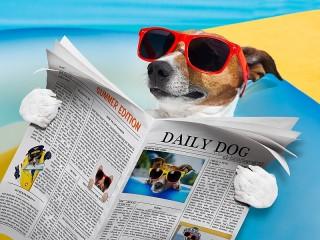 Собирать пазл Грамотная собака онлайн