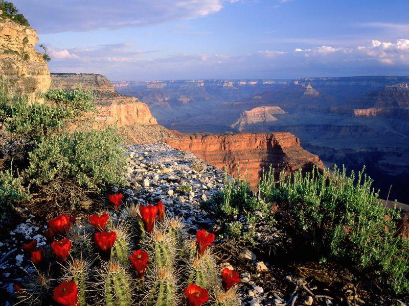 Пазл Собирать пазлы онлайн - Grand Canyon