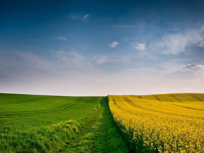 Пазл Собирать пазлы онлайн - Граница в поле