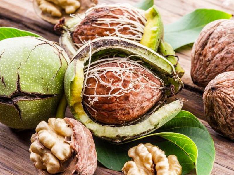 грецкий орех лечение простатита