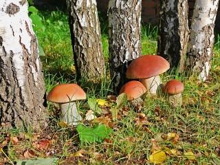 Собирать пазл Грибы в лесу онлайн