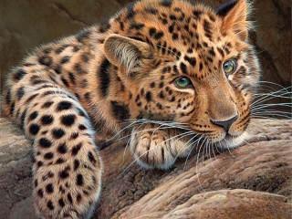 Собирать пазл Грустный леопард онлайн