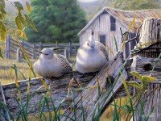 Собирать пазл Хохлатые голуби онлайн