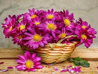 Собирать пазл Хризантемы в корзине онлайн