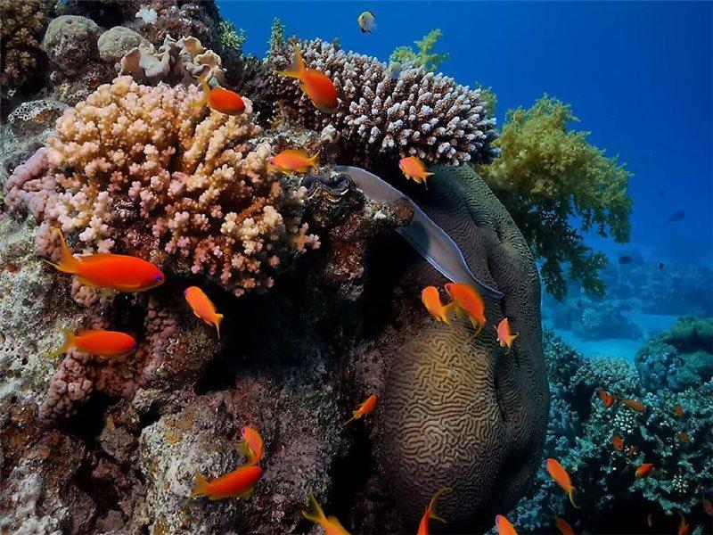 Пазл Собирать пазлы онлайн - Кораллы